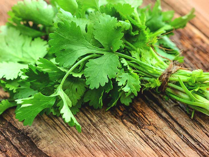 Coriander health benefits and many south asian countries use in food like thai food