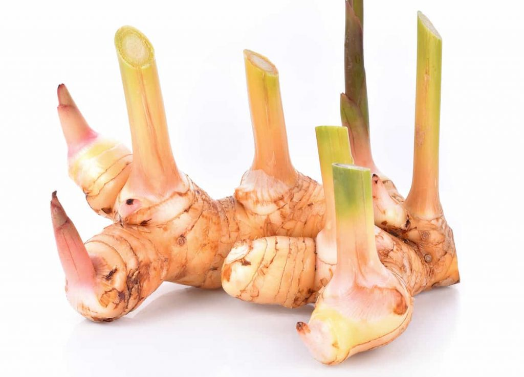 Galangal health benefits its also use thai food