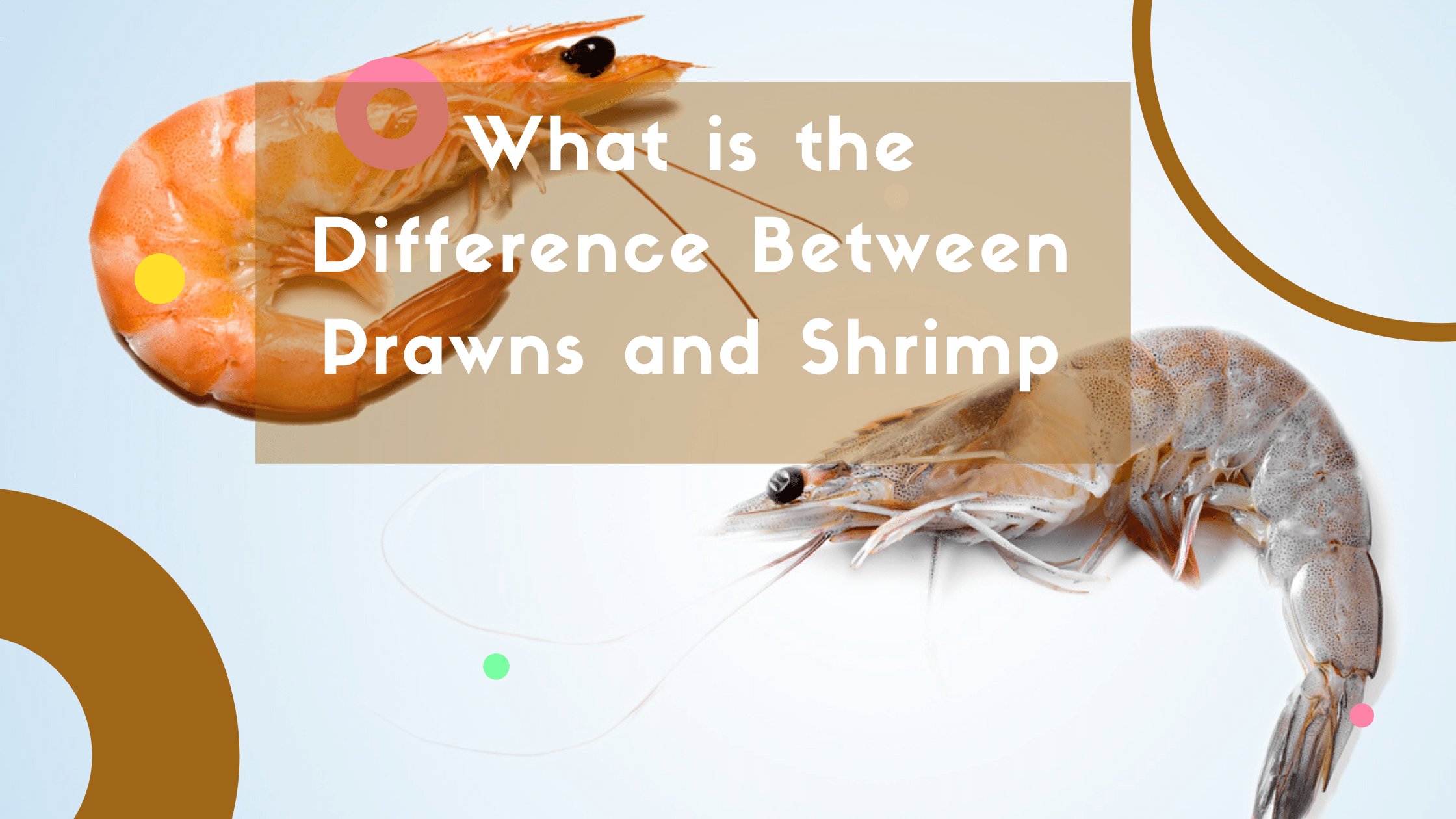 What is the Difference Between Prawns and Shrimp